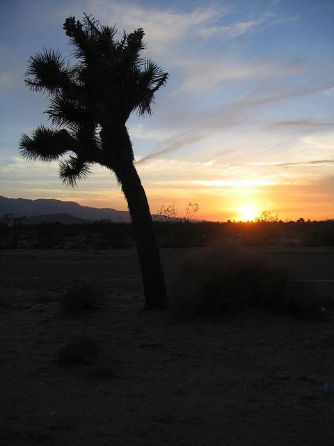 Joshua-Tree-National-Park-5