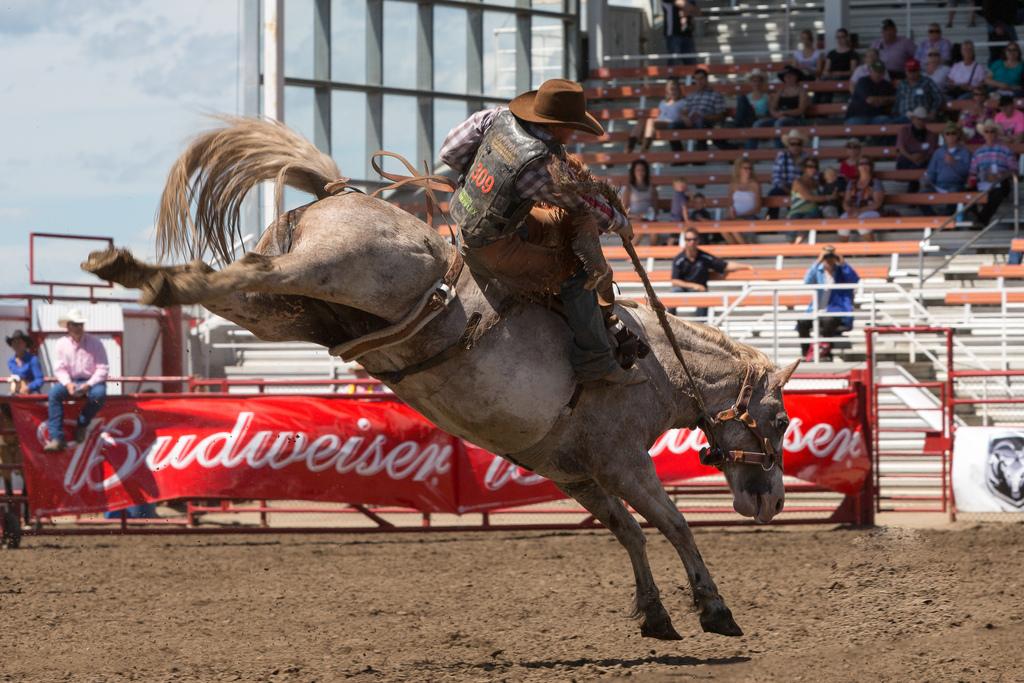 2013 Ponoka Stampede Buckin Horses The Injection