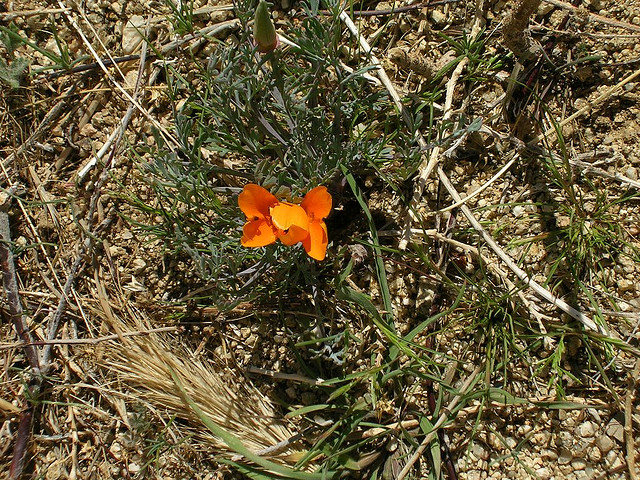 Antelope Valley - 2
