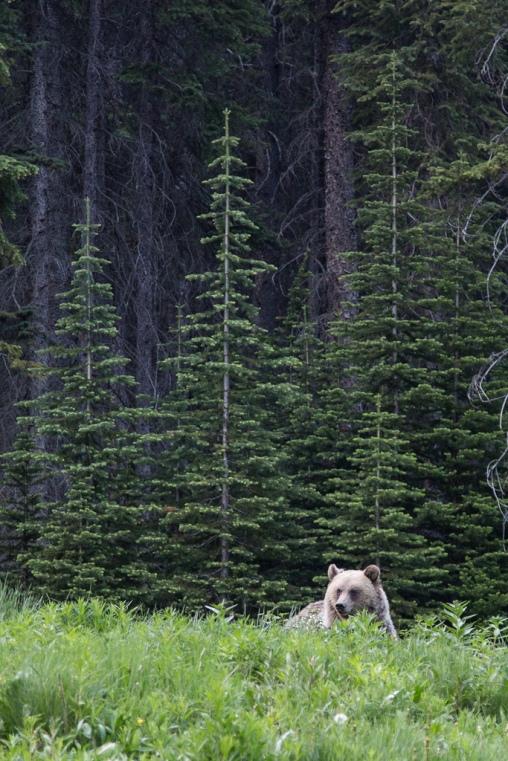 Banff National Park 348
