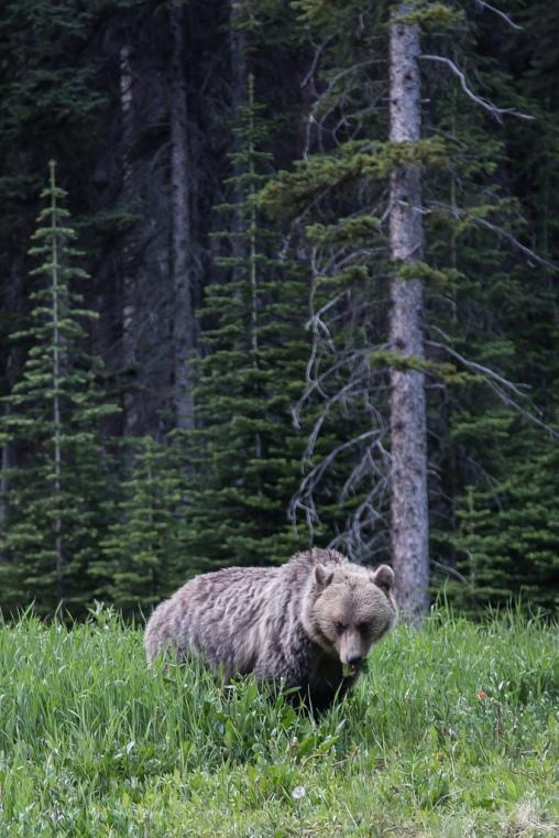 Banff National Park 405