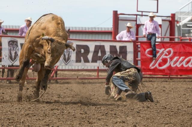 Panoka Rodeo 205