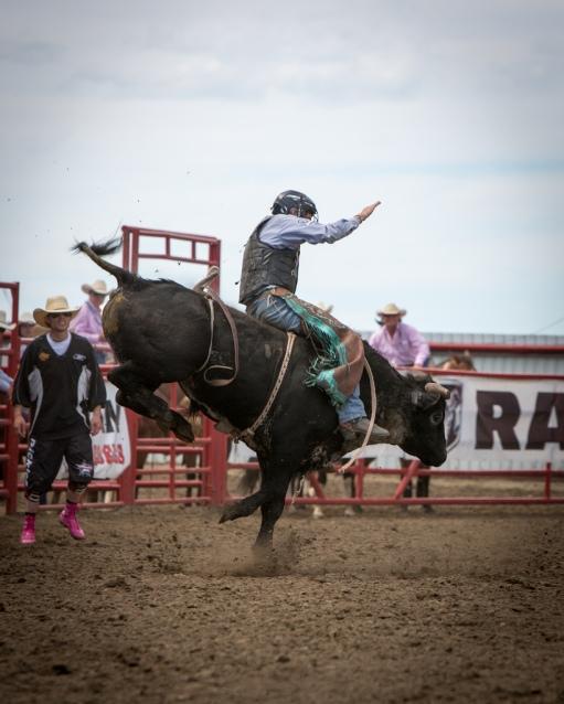 Panoka Rodeo 208
