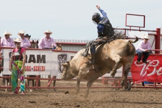 Panoka Rodeo 233