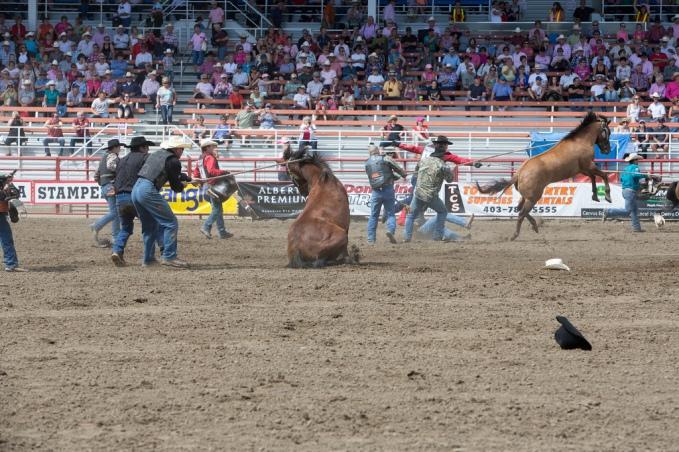 Panoka Rodeo 244