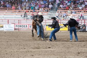 Panoka Rodeo 249
