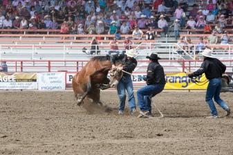Panoka Rodeo 250
