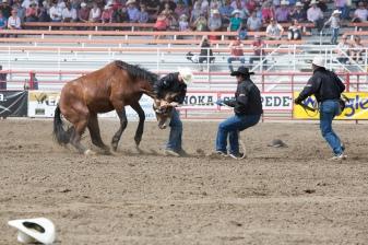Panoka Rodeo 251