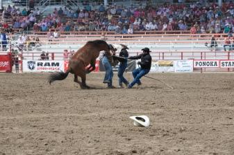 Panoka Rodeo 253