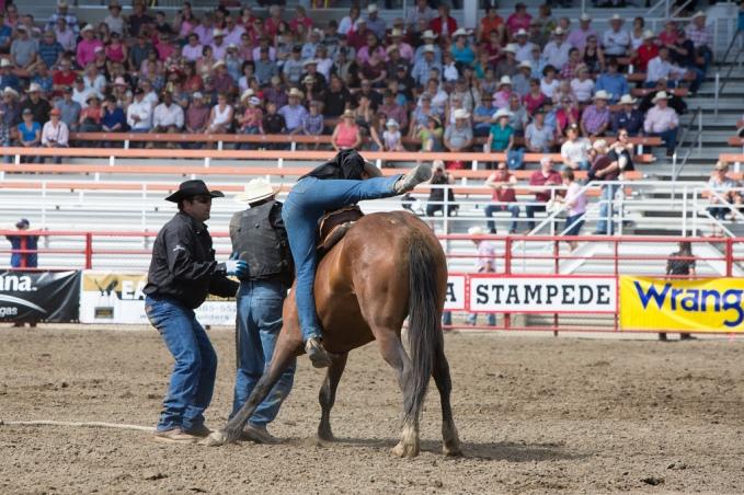 Panoka Rodeo 261
