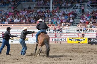 Panoka Rodeo 264