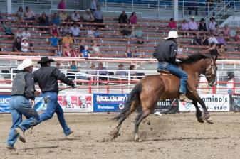 Panoka Rodeo 268