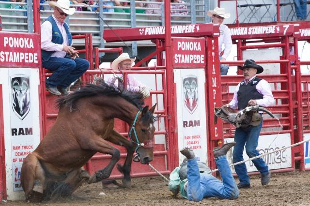 Panoka Rodeo 276