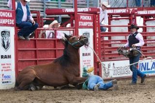 Panoka Rodeo 277