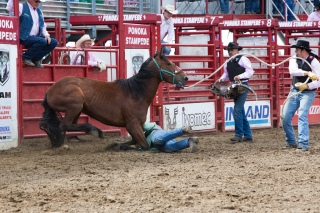 Panoka Rodeo 278