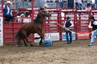 Panoka Rodeo 279