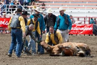 Panoka Rodeo 283