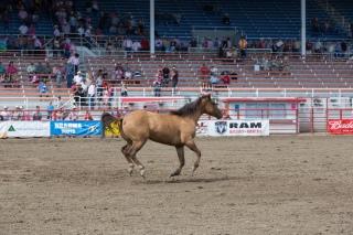 Panoka Rodeo 287
