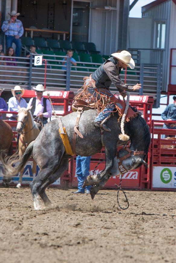 Panoka Rodeo 408