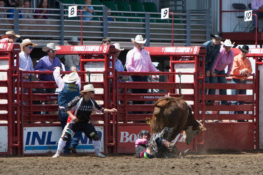 Panoka Rodeo 452