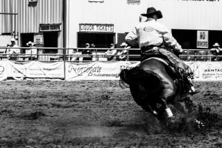 Panoka Rodeo 489