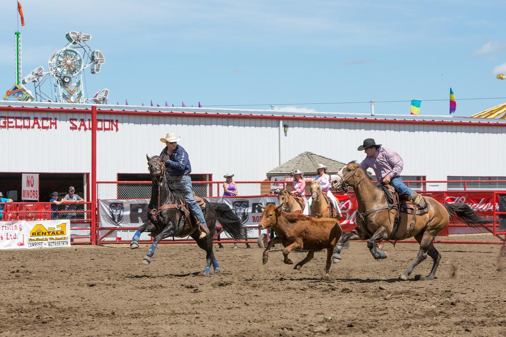 Panoka Rodeo 502