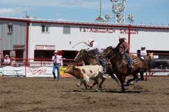Panoka Rodeo 509
