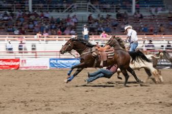 Panoka Rodeo 513