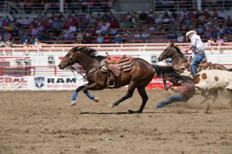 Panoka Rodeo 514