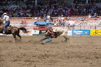 Panoka Rodeo 518