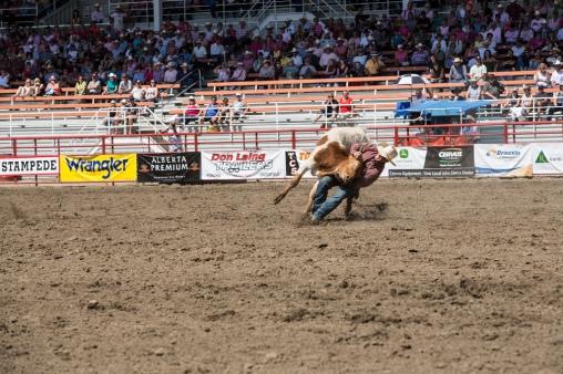Panoka Rodeo 520