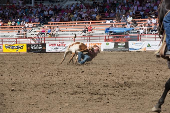 Panoka Rodeo 521