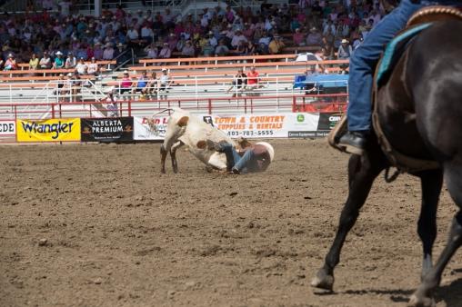 Panoka Rodeo 522