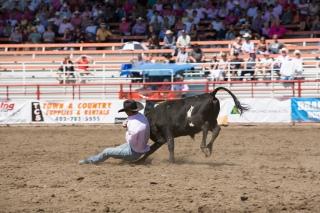 Panoka Rodeo 546