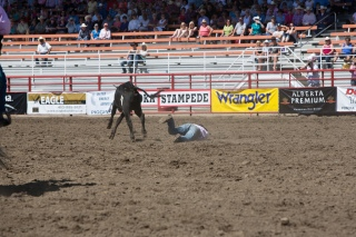 Panoka Rodeo 552