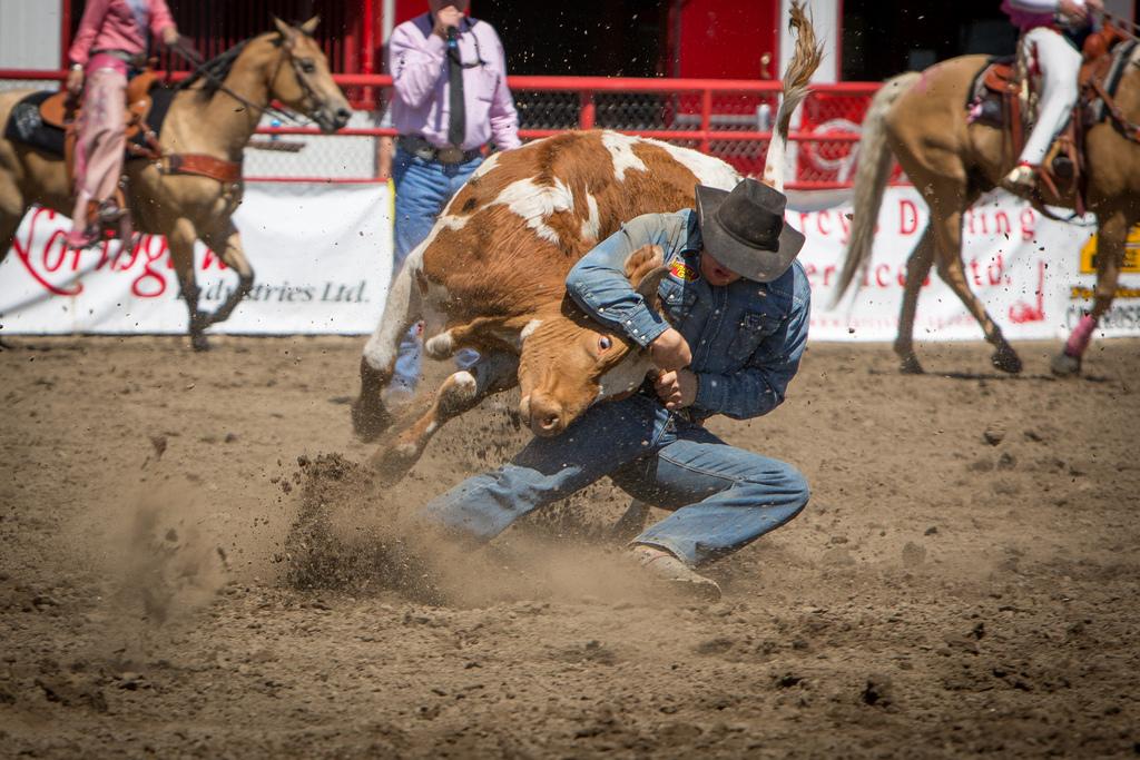 Panoka Rodeo 575