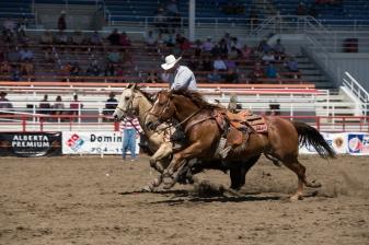 Panoka Rodeo 590