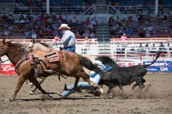 Panoka Rodeo 591