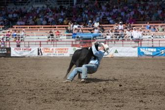 Panoka Rodeo 597