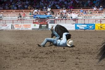 Panoka Rodeo 599