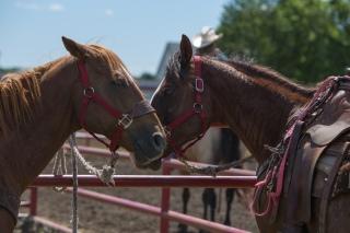 Panoka Rodeo 651