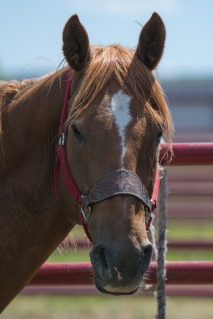 Panoka Rodeo 663