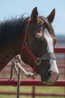 Panoka Rodeo 667