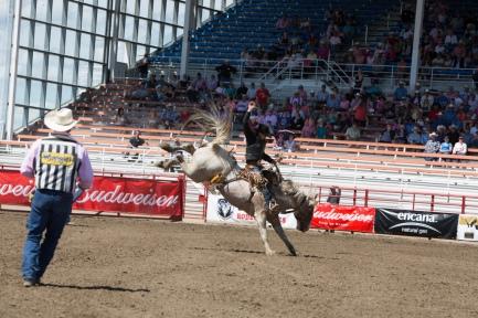 Panoka Rodeo 700