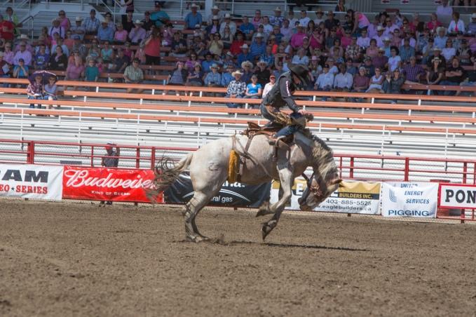 Panoka Rodeo 701
