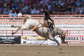 Panoka Rodeo 702