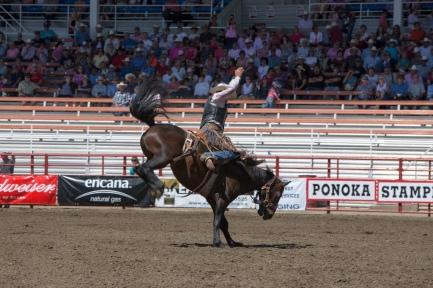 Panoka Rodeo 720