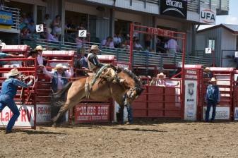 Panoka Rodeo 793