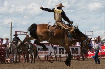 Panoka Rodeo 798