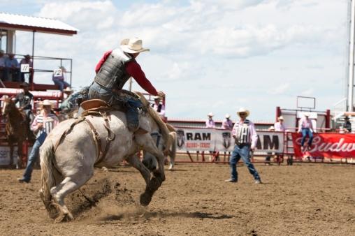 Panoka Rodeo 843